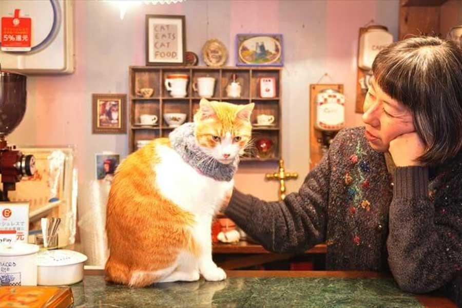 「プチミュゼ」のオーナー久保木さんと元捨てねこの「シャンソン」くん【写真:猫ねこ部】