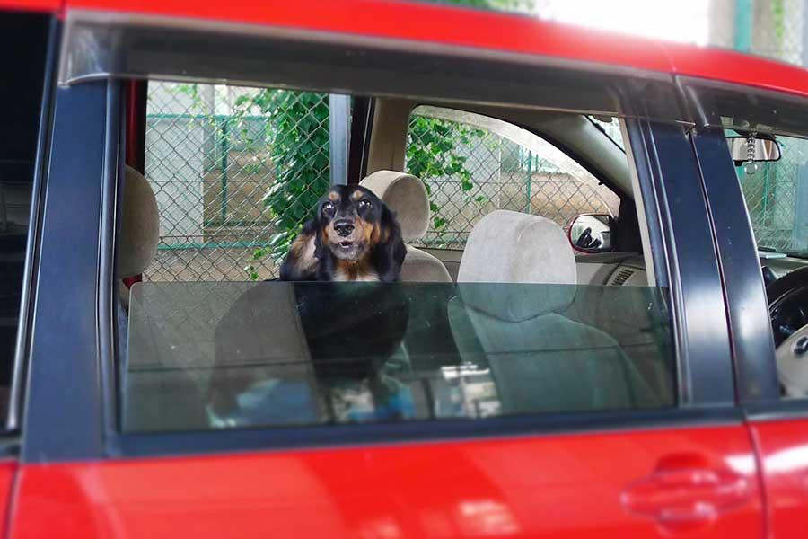 フリー状態にして犬を乗車させたり、窓から顔を出して走行していると道路交通法違反になることも(写真はイメージ)【写真:写真AC】