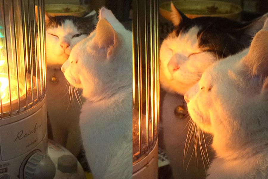炎に魅せられるホップくん(手前)とチップくん(奥)【写真提供:やまざきうなむー(@unamuu2014)さん】