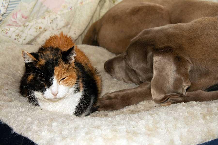 大切な「家族」だからこそ配慮したい、ペットの老後のこと(写真はイメージ)【写真:写真AC】