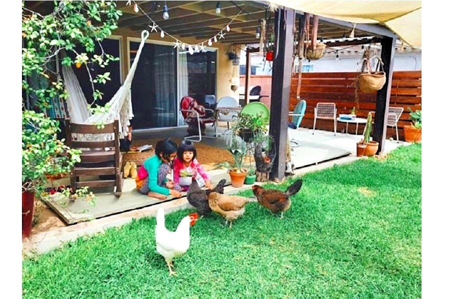 自宅で飼っている鶏たちの世話をする娘たち【写真:小田島勢子】