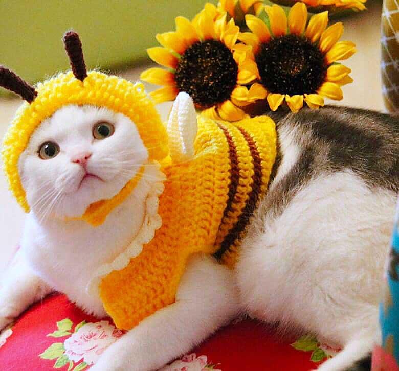 ハチのコスチュームがキュートな「サスケ」くん【写真:猫ねこ部】
