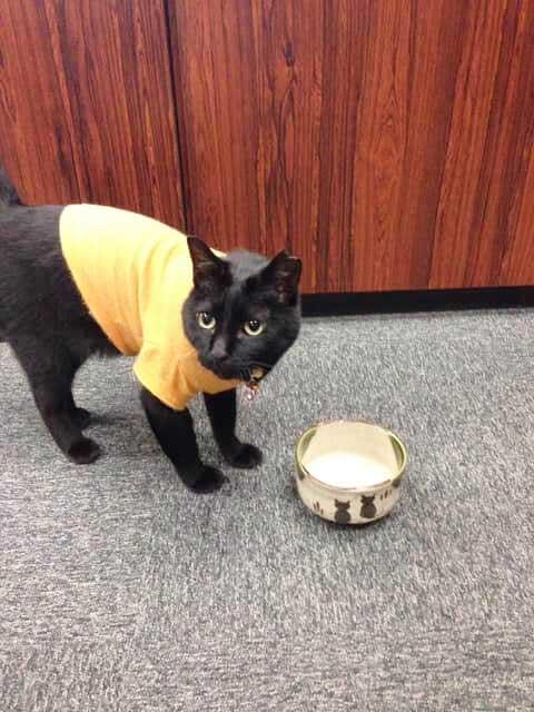 「ごはんちょうだい」と媚を売る「のんこ」 佐藤さんはかわいさにノックアウト【写真:猫ねこ部】