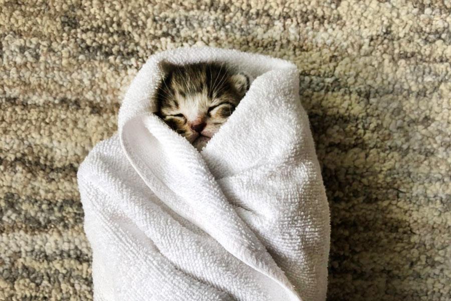 おくるみで眠る「まるこ」ちゃん【写真提供:なかざわとも(@mow0122)さん】