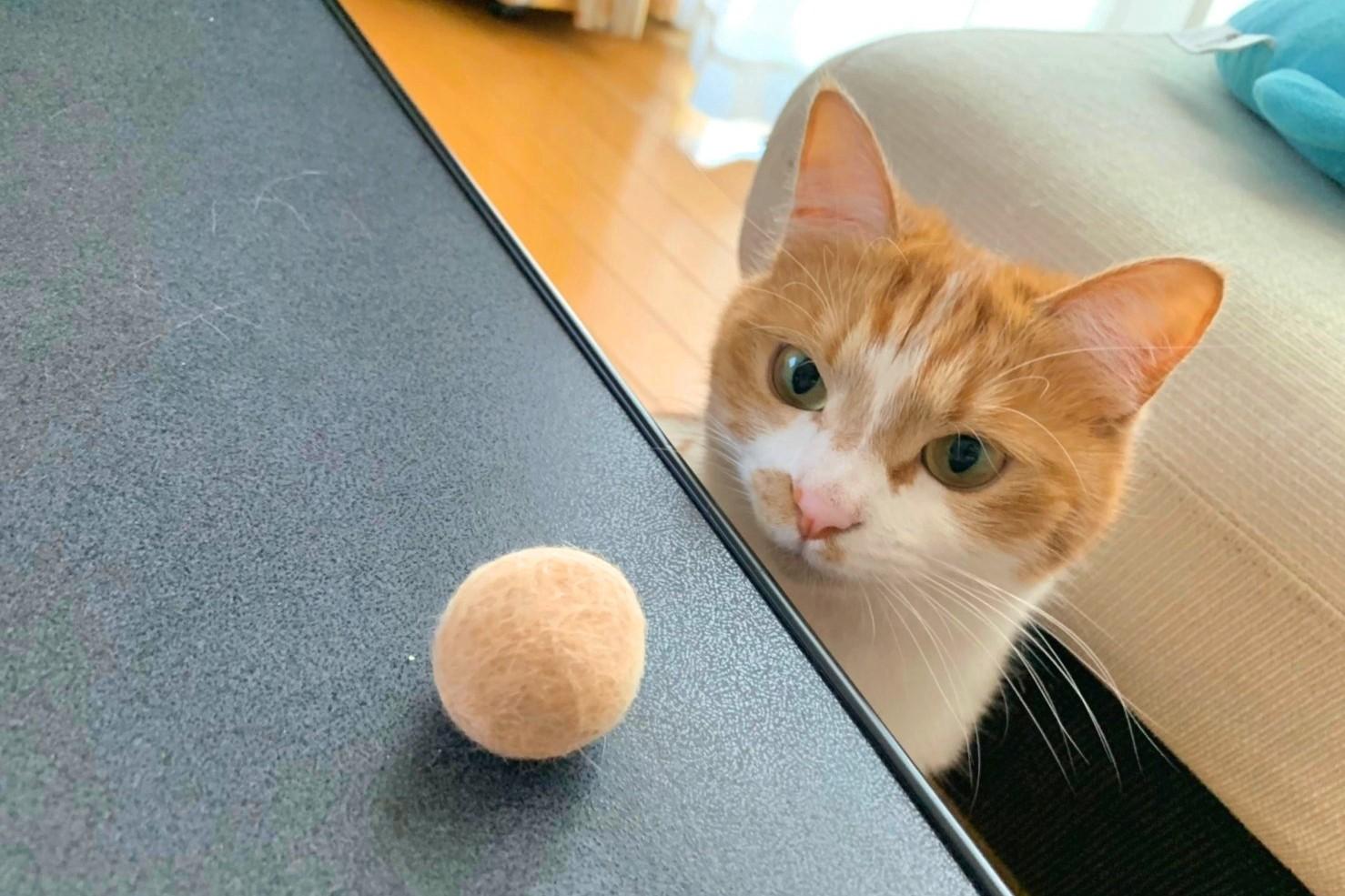 毛玉ボールを見つめる「こはる」ちゃん【写真提供:Honobono Cat(@cat_honobono)さん】