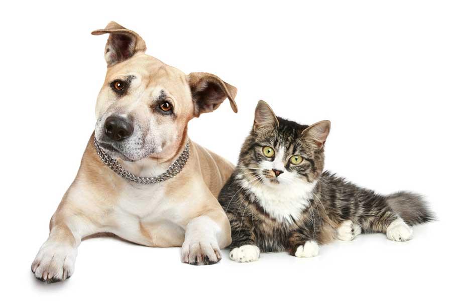 思いが込められたペットの名前 犬・猫の人気は【写真:アイペット損害保険株式会社】