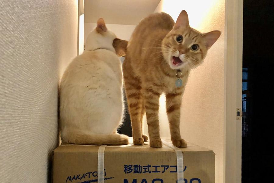 荷物の上に乗る「イチ」くん(左)と「あめ」くん(右)【写真提供:イチそらあめ(@kikechi776)さん】