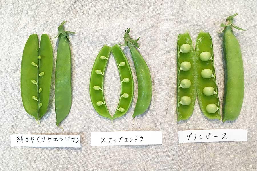 マメ科エンドウ属の中身。豆の大きさが異なる【写真:こばやしなつみ】