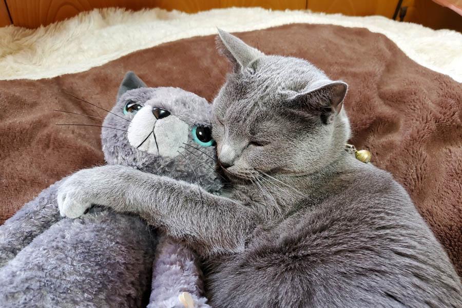 ぬいぐるみを抱いて眠る「マリリン」ちゃん【写真提供:junjun(@junjun25253939)さん】