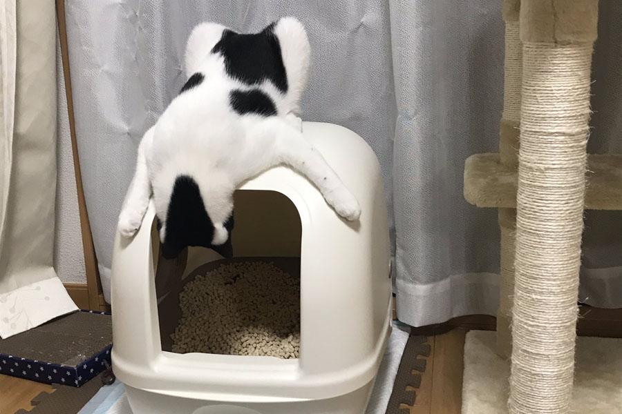 トイレを覗き込む「オズ」くん【写真提供:オズとゆかいな魔法使い(@OZnyankenobi)さん】