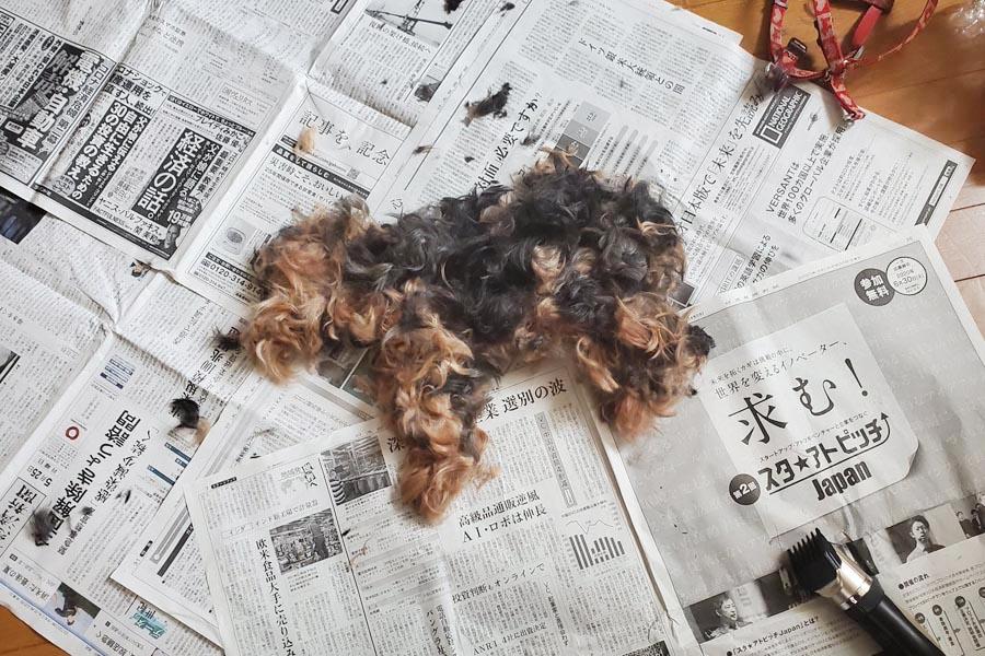 トリミングした毛で作られた「ぐらっせ」くん【写真提供:Meglue(@me_glue)さん】