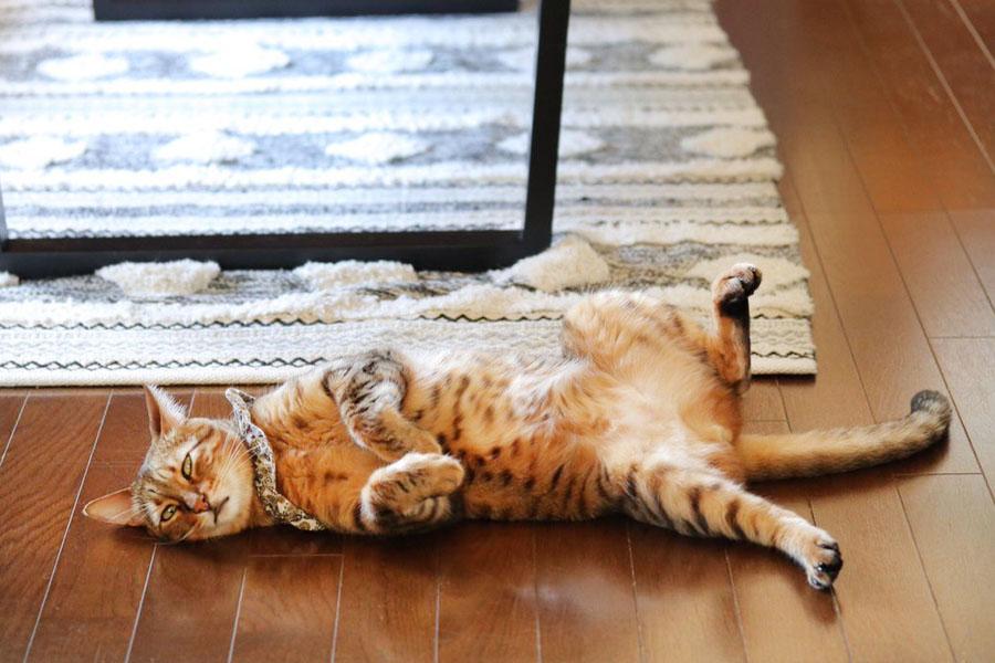 へそ天で寝る「レオン」くん【写真提供:ちさ(@ccchisa76)さん】