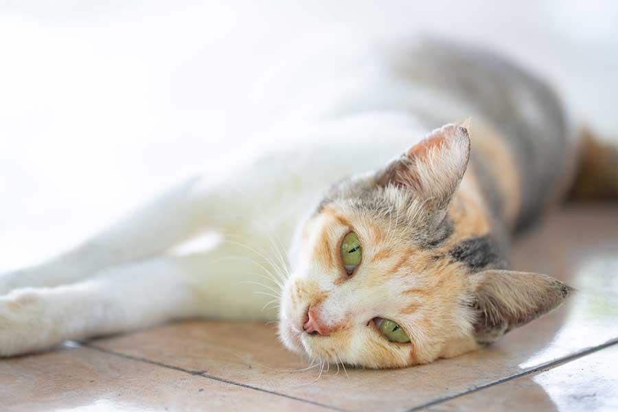 暑い夏も元気に過ごしてほしい。猫に最適なエアコンの設定温度や注意点は(写真はイメージ)【写真:写真AC】