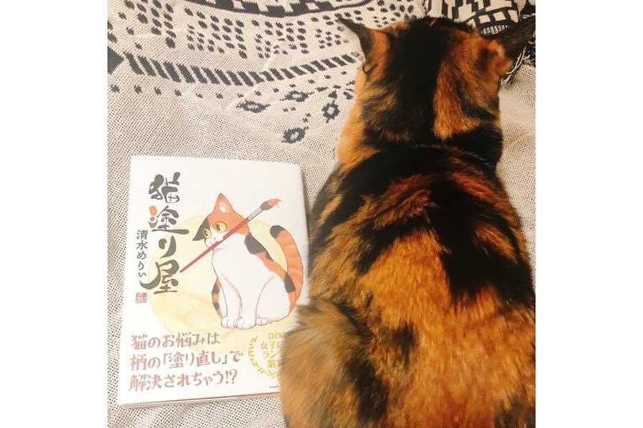 「猫塗り屋」と並ぶ清水さんの愛猫【写真提供:清水めりぃ(@zatta_shimizu)さん】