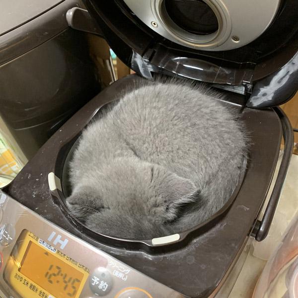 炊飯器にジャストフィットして寝る「ケッサク」くん 【写真提供:にょーたろー(@sukeyotafumi)さん】