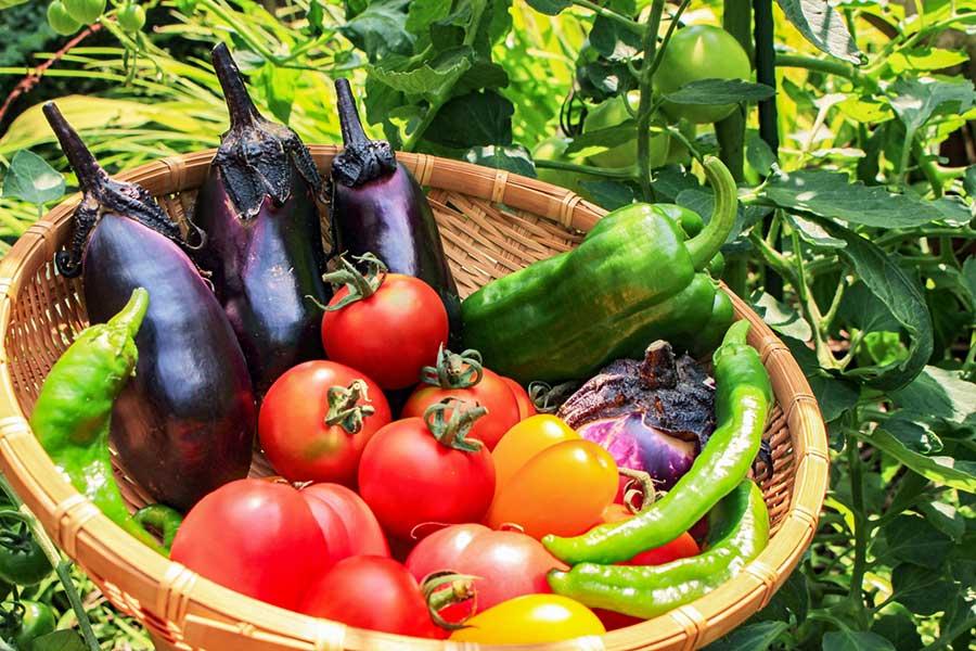 夏野菜や果物で熱中症対策を(写真はイメージ)【写真:写真AC】