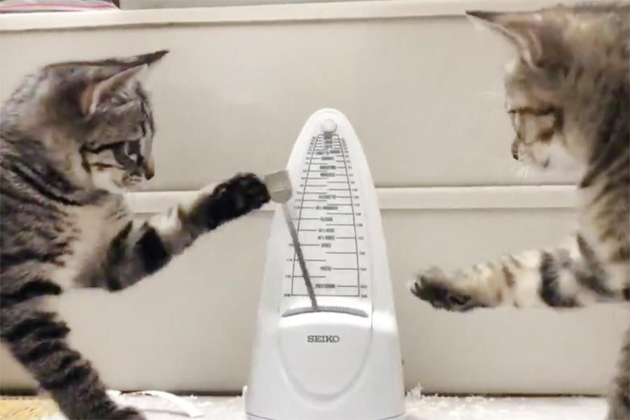 動画のワンシーン。メトロノームにじゃれる「みつば」ちゃんと「ふたば」ちゃん【画像提供:保護猫一家(パパはいにゃい)(@3XYOZsl0Vx0HgFk)さん】