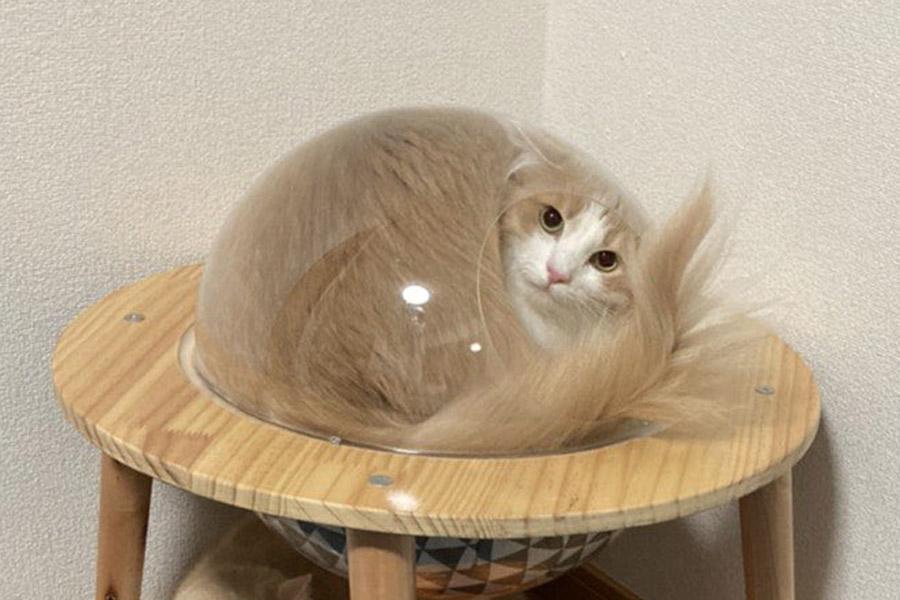球体型のねこ用ハウスに入る「ねる」くん【写真提供:ねるandまる(@neru_0515)さん】