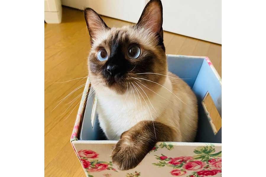 花柄のゴミ箱に入る「なみ」ちゃん【写真提供:ソレイユ(@Oa1Un)さん】