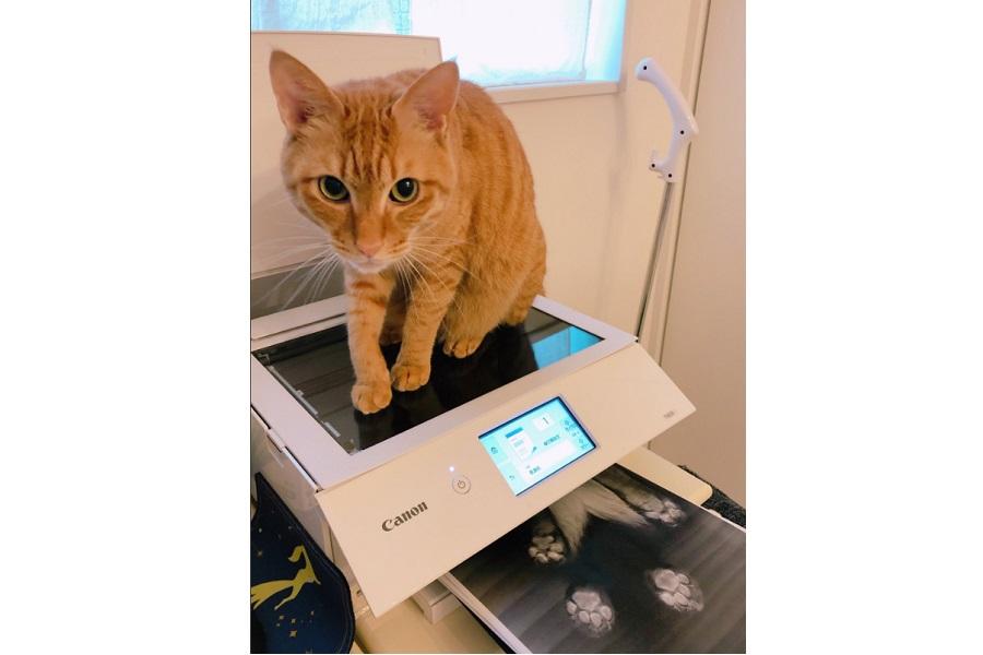 コピー機の上に乗る「きなこ」くん。紙の排出口からは、くっきりと印刷された肉球が……【写真提供:Cさん】