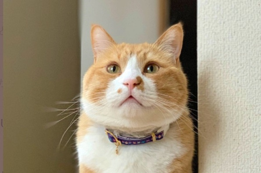 飼い主さんはおはなの周りに惹かれたという「さんて」くんのキュートな顔【写真提供:さにたすさんてちくわ丸の人(@tikuwamaru0728)さん】