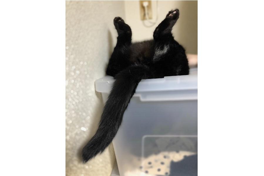 衣装ケースの上で眠る「うに」ちゃん。映画の名シーンにそっくり?【写真提供:もにきち(@monikichi)さん】