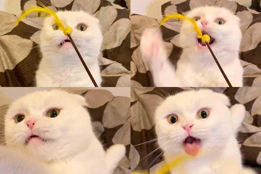 夢中になっておもちゃで遊ぶ「むく」くん【写真提供:もろとむく@まるか(@s_sekko)さん】