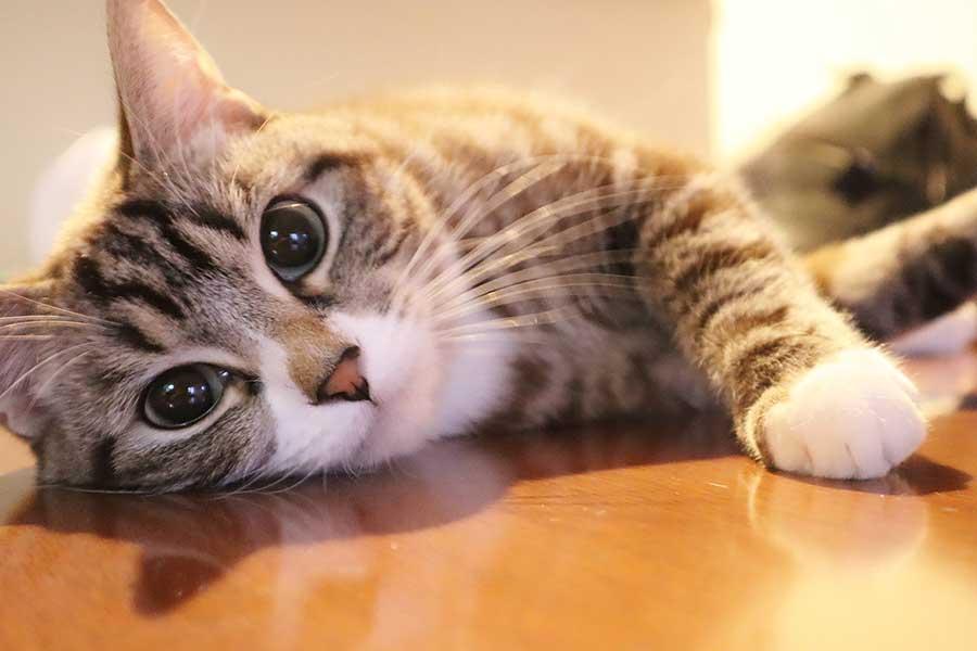 猫のまばたきは飼い主への愛情表現(写真はイメージ)【写真:写真AC】