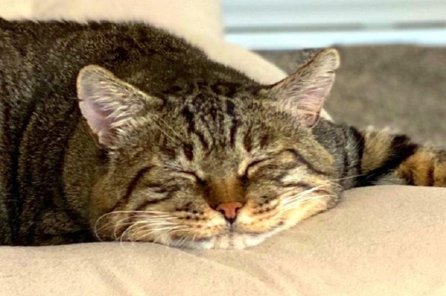 気持ち良さそうに眠る「にゃん太」くん【写真提供:豆(@xmametarox)さん】