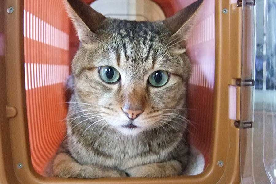 みんなが愛猫のキャリーバッグを選ぶ際に重視したポイントは?(写真はイメージ)【写真:写真AC】