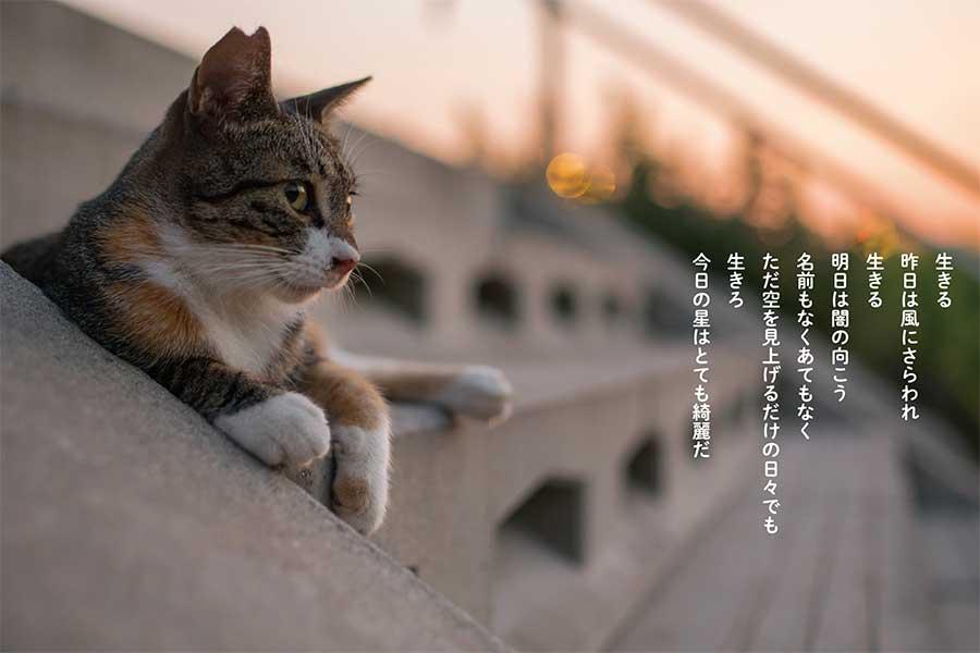 """""""猫詩""""写真集「猫から目線」(KKベストセラーズ)【写真:KKベストセラーズ】"""