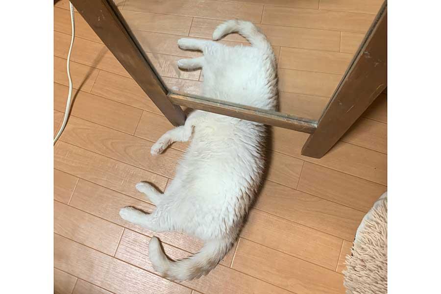 鏡に身体が映り込み、奇妙な生物のように見える「みるく」くん【写真:ふづびっち麻婆豆腐(@fuuuusama)さん】