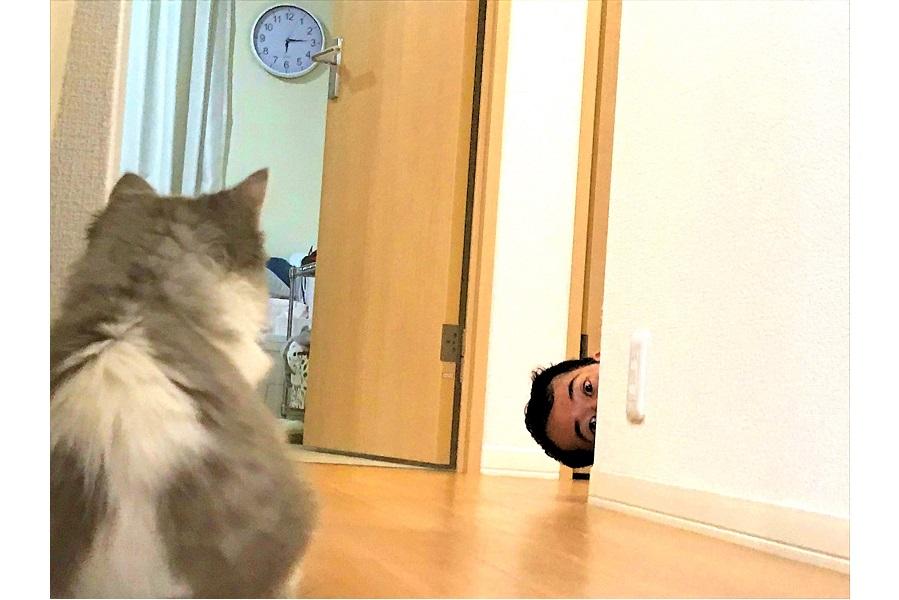 見つめ合う「テミー」ちゃんとご主人【写真提供:育猫中のどぅんた(@DwnTa_matsu)さん】