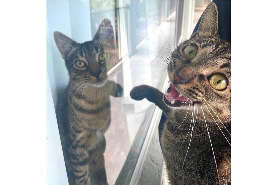 まるで鏡のよう? 元保護ねこの「スモーキー」くん(右)【画像提供:ぽん@フロリダで薬剤師修行中(@ponzunopon)さん】
