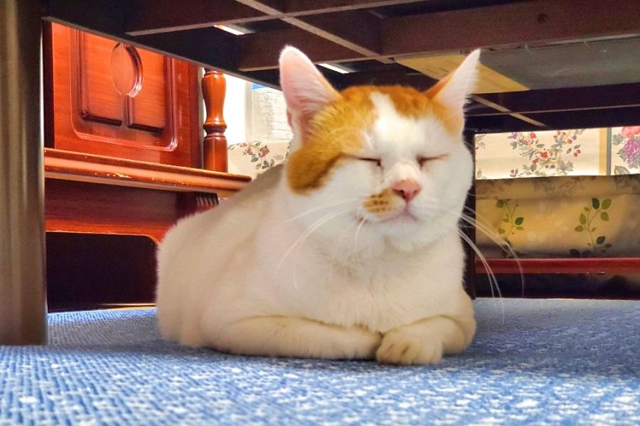 飼い主を待ちわびる「たま」くん(右)【画像提供:虎太郎くん(4)の母ちゃん。(@kotamama0827)さん】
