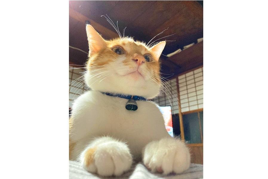 お腹の上に乗るRくん【写真提供:takamura(@tak_a_mura)さん】