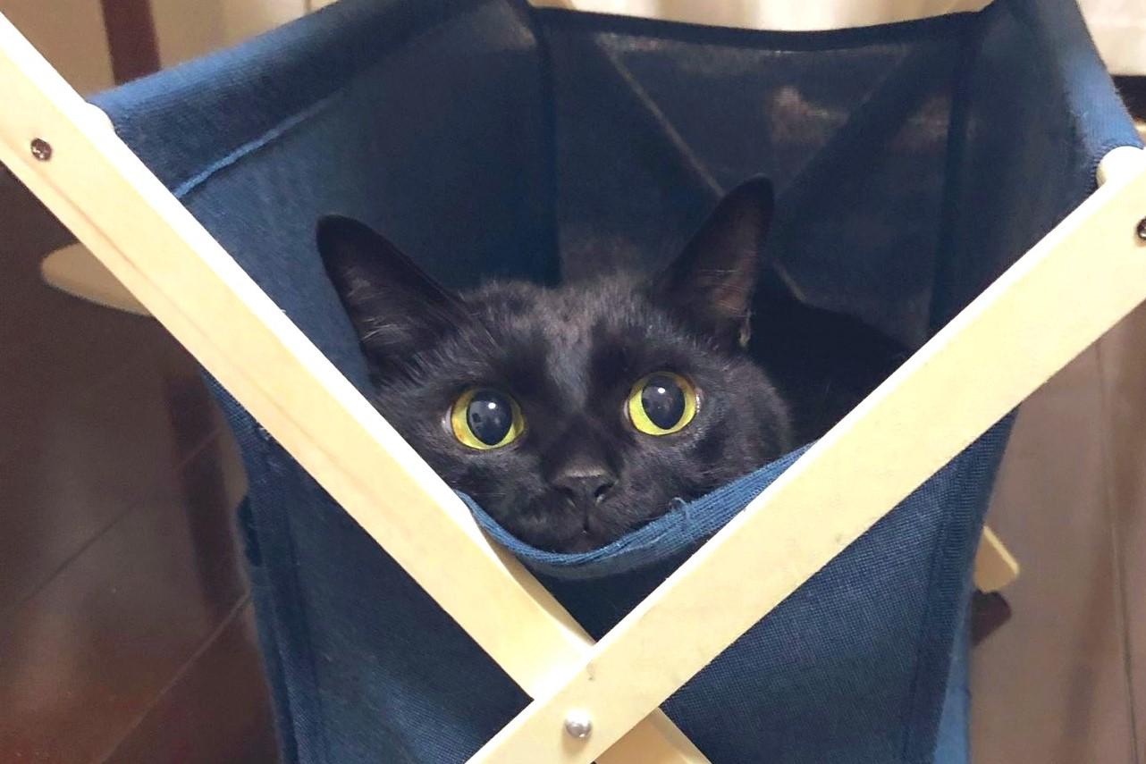 マガジンラック内でリラックスする「こねろく」くん【写真提供:こねろく【黒猫】(@nkknrk)さん】