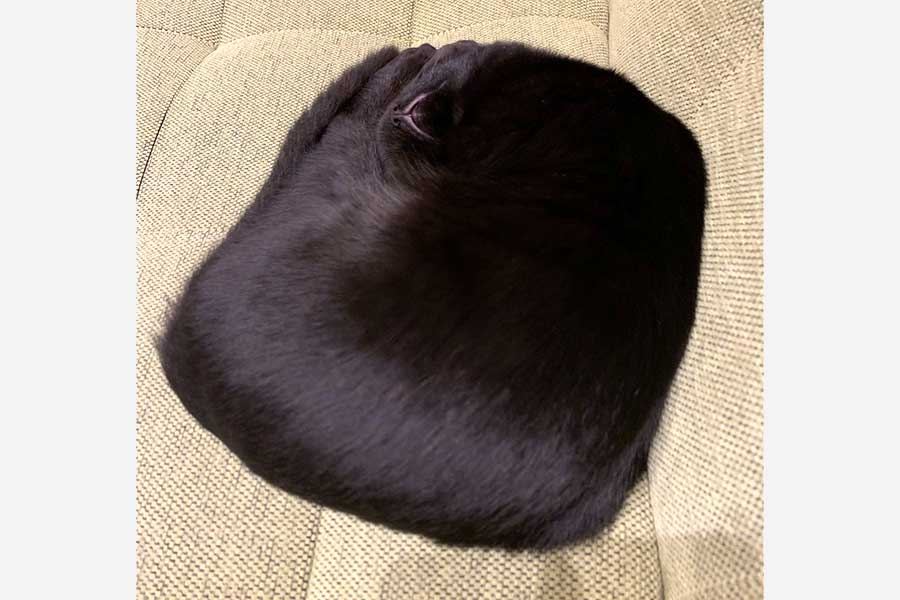 「四角いねこ」!? 驚きの寝相を見せたラルくん【写真提供:黒猫ラル(@lull0731)さん】