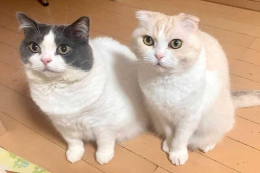 左がトムくん、右がユキちゃん【写真提供:県道92号(@Kendo92go)さん】