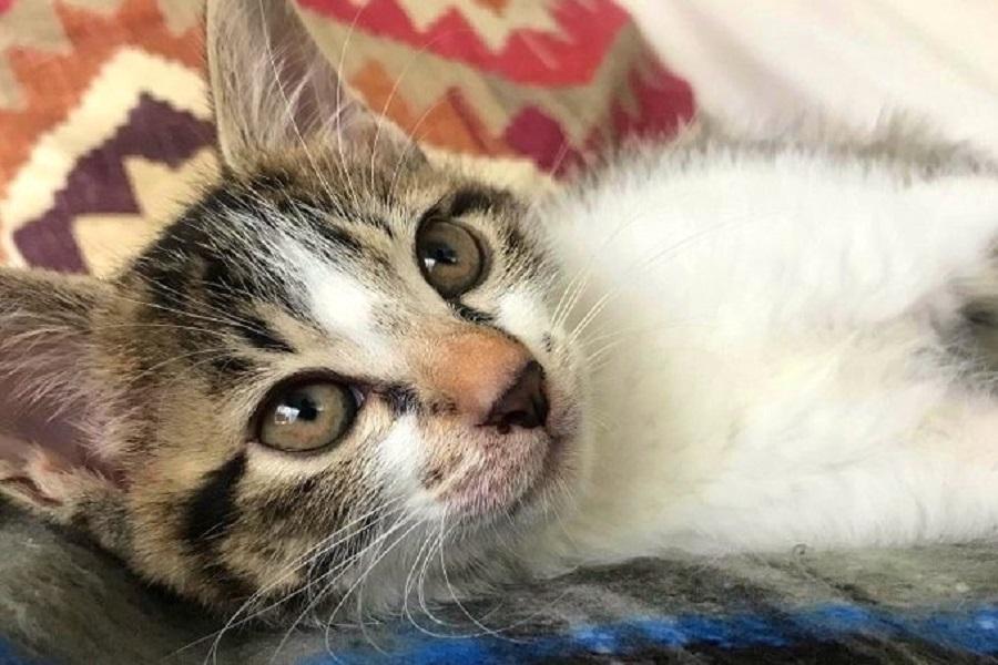 ポカポカの電気ブランケットを初体験中の梅次郎くん【写真提供:ふれていいマーキュリー(@cat_or_die)さん】