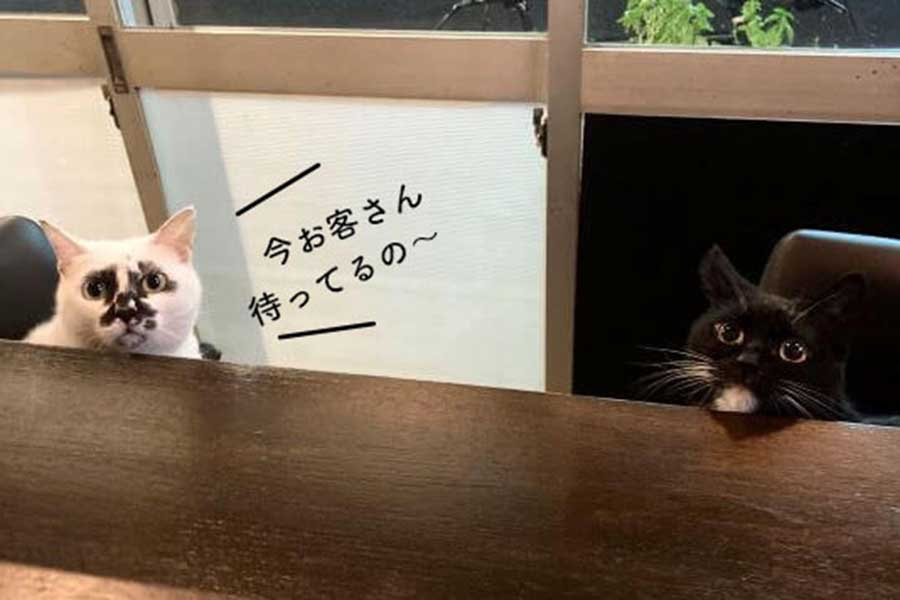のんびりと、気まぐれに? 全国のねこ好きなお客さんを待つ【写真:猫ねこ部】