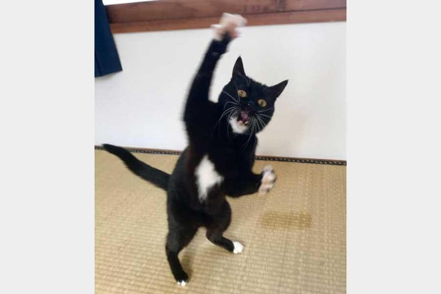 白手袋がかわいいいタビ子ちゃん【写真:猫ねこ部】