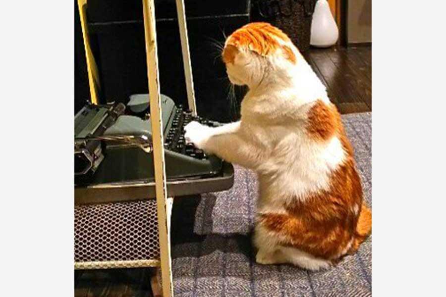 タイプライターに向かう、スコティッシュフォールドのマルくん【写真:愛猫めもりー/Love cat memory(@nS5NKfflOKJ2oGE)さん】