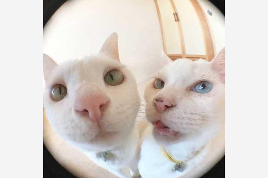向かって右のイエローの首輪をしているのがぷるちゃん、左にいるライトブルーの首輪がリリーちゃん【写真提供:しんばぷー(@shinbaba10)さん】