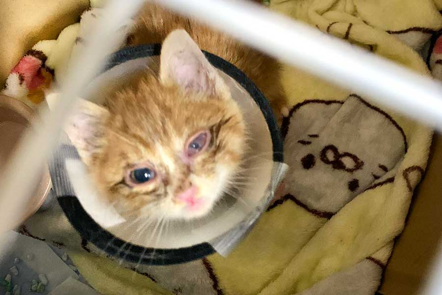 保護から5日後。左目は少しずつ治りつつある様子【写真提供:LiSAッ子 猫にゃんず(@neconecomirin)さん】