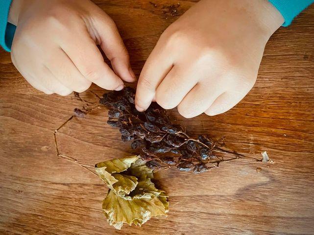 干したレーズンを食べる、勢子さんの三女の手【写真:小田島勢子】