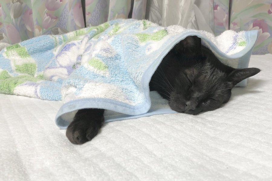 毛布をかけて爆睡するろんくんの別ショット【写真提供:AKR(@bou128)さん】