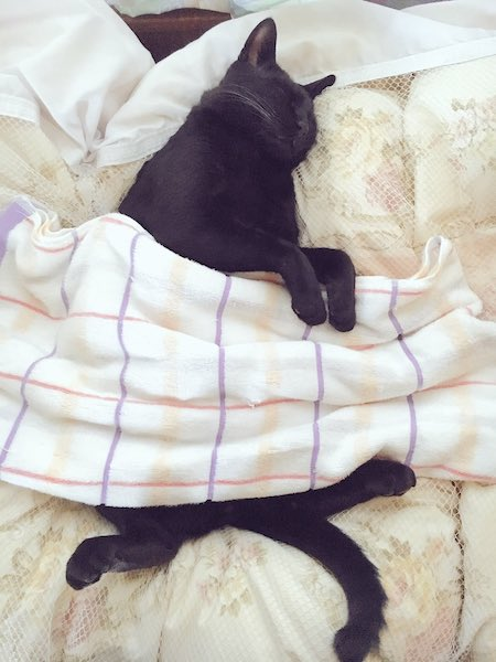 毛布をかけてまだまだ爆睡中のろんくん【写真提供:AKR(@bou128)さん】