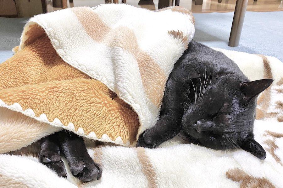 しっかり毛布をかけて爆睡するろんくん【写真提供:AKR(@bou128)さん】