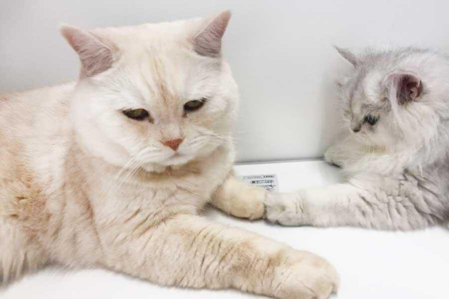 左が兄貴分の小鉄くん、右が妹分の小梅ちゃん【写真提供:こてつとこうめ(@kotechan0405)さん】